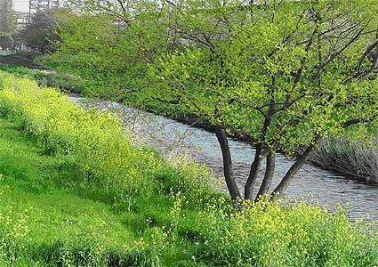 野川とは? 野川とハケの森の会